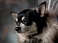hund_800