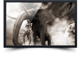 thumb_elephant1