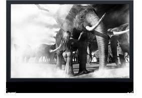 thumb_elephant3